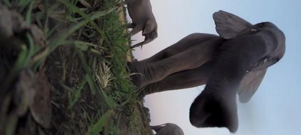 elephant stomps gopro