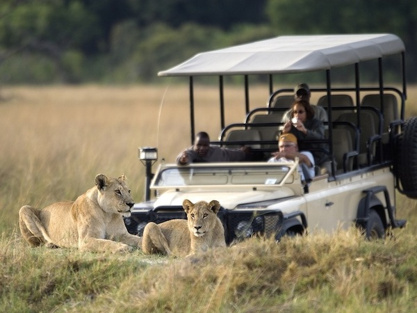 large_Vumbura_Plains-Wildlife