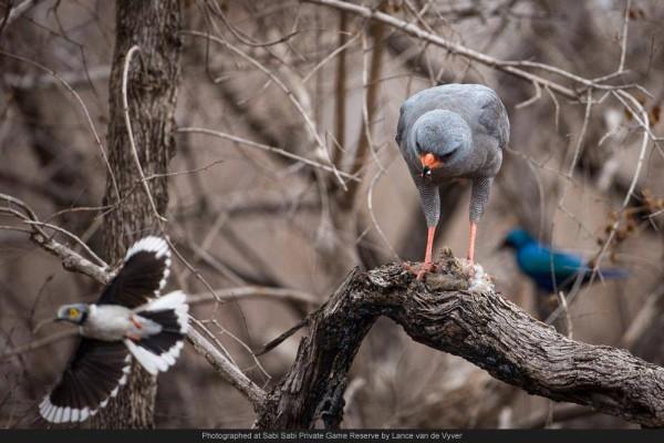 birds sabi wabi