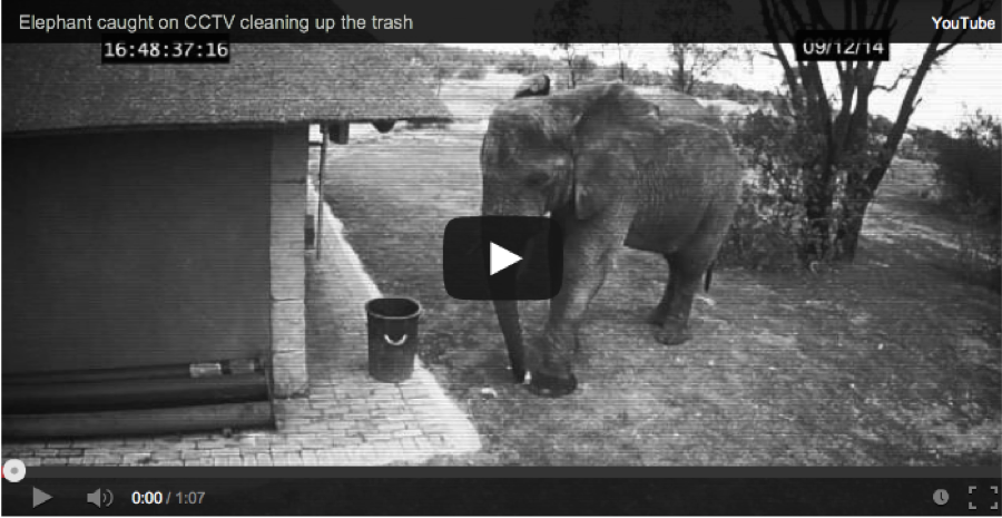 video of elephant picking up trash