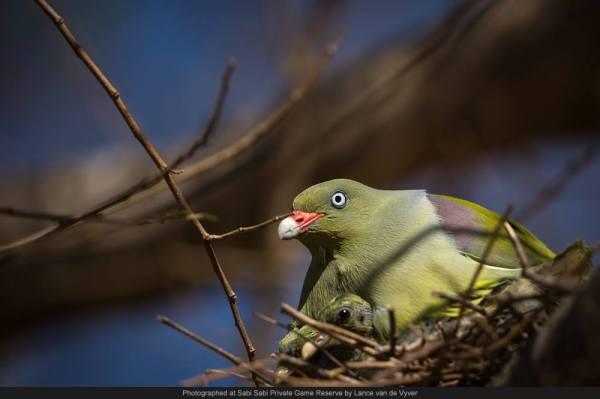 sabi wabi bird in nest