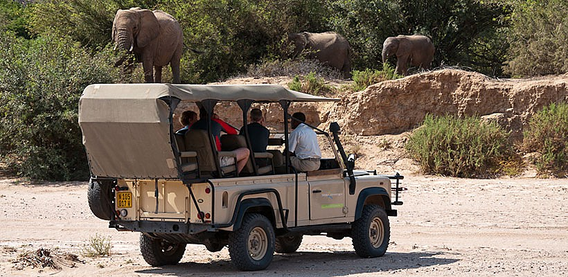 desert adapted elephants damaraland