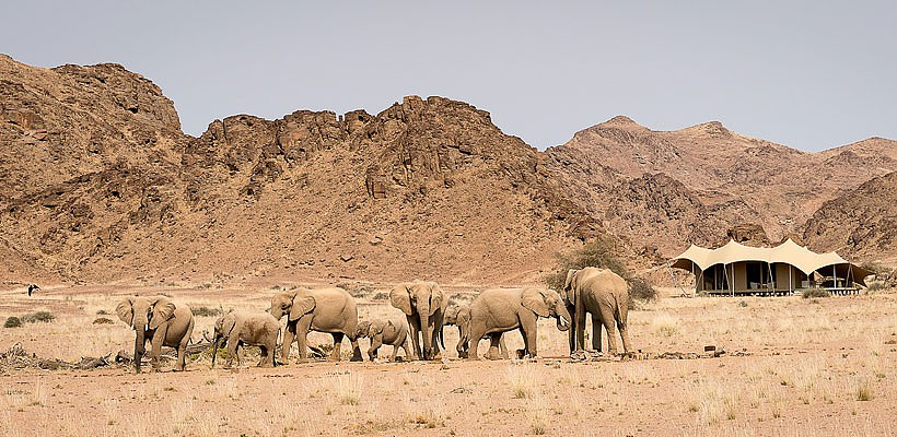 desert adapted elephants namibia