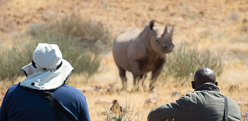 desert adapted black rhino namibia