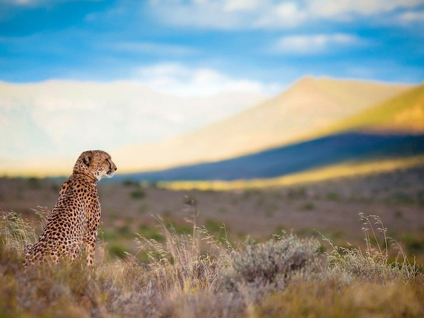 large_cheetah_look_2__872x580_