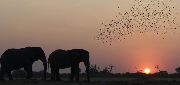 savute-elephant-camp-night-drive
