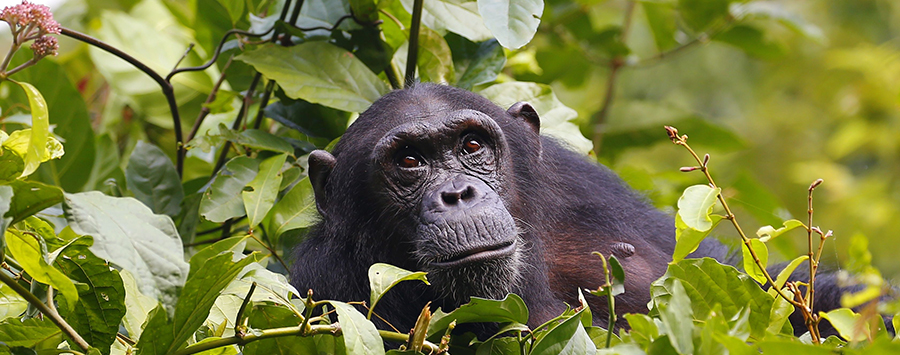 Mahale: Much More Than Chimps