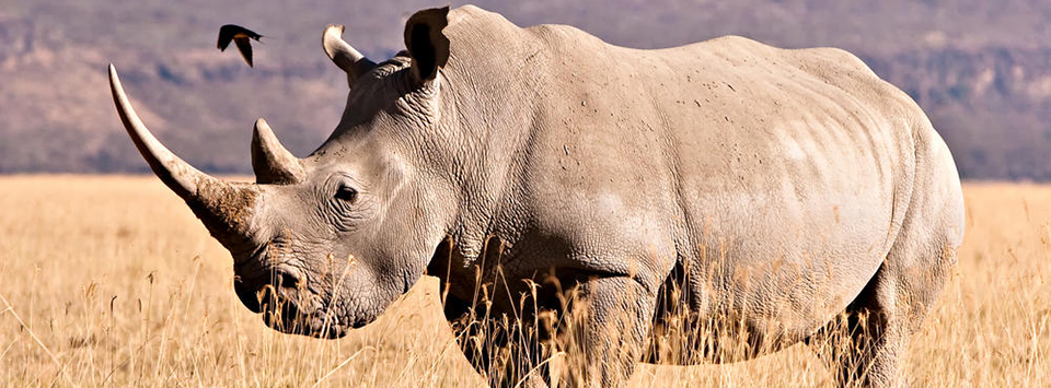 Saving Rhinos with Music in Namibia