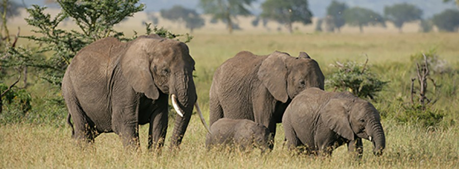 Bad Economics: Pachyderm Poaching & Refuge Reductions
