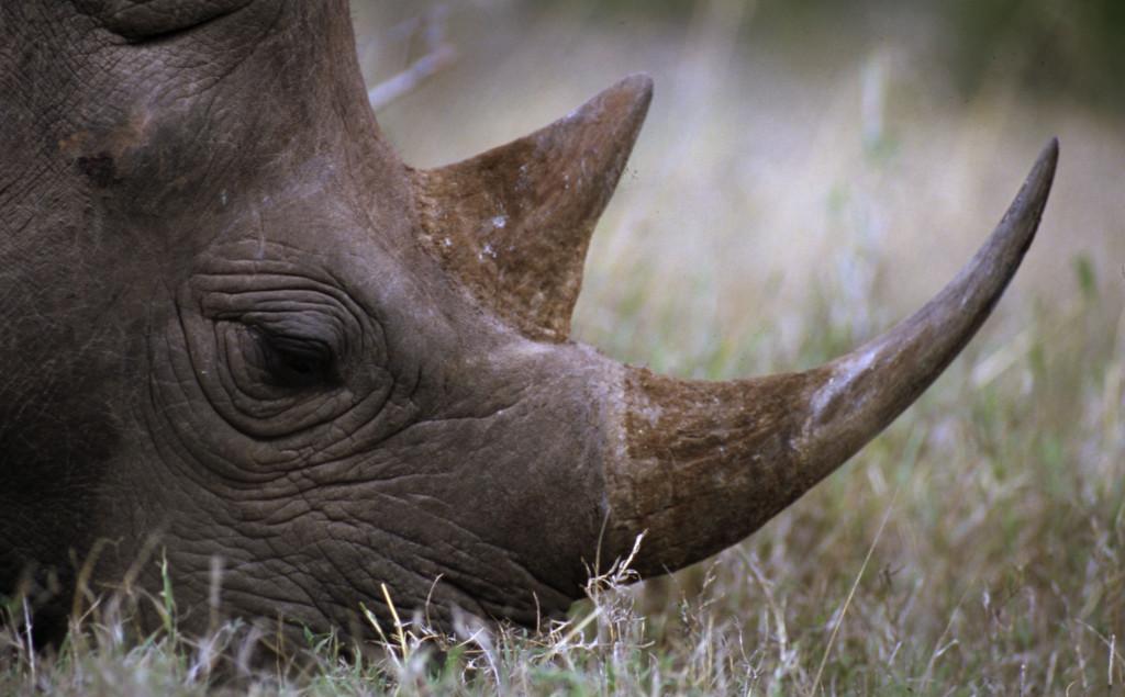 © Michel Gunther/WWF-Canon