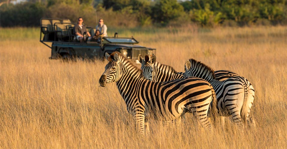 The Safarist   The Blog of iSafari com