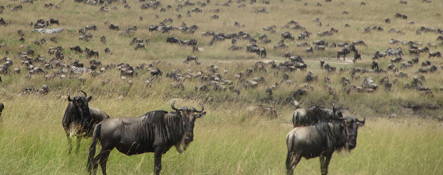 Five Facts about Kenya's Maasai Mara National Reserve