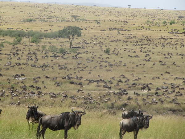 See East Africa's Great Migration in the Maasai Mara