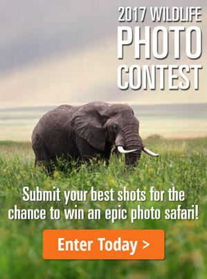 2017-wildlife-photo-contest