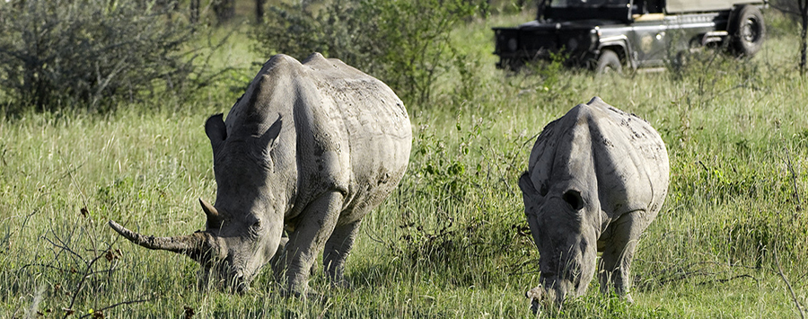 New Music Video Supports Rhino Conservation in Namibia
