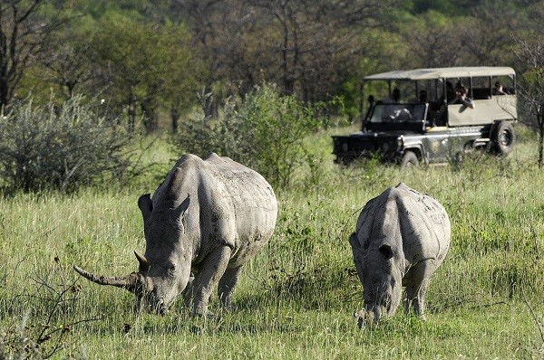 Desert Rhino Safari in Namibia